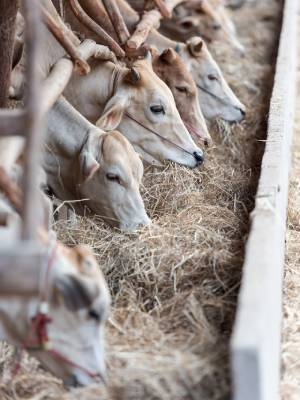 Animal Food Production